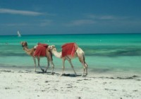 Holiday in Djerba – Travel info and Hotel Guide